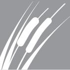 Reeds icon