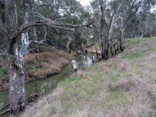 Cox's Reserve