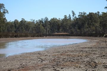Reedy Lake with little water in dry conditions
