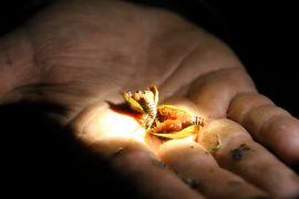Tadpole shrimp