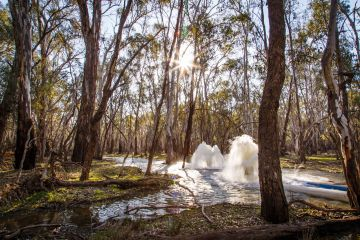 Early stages of environmental water delivery at Nyah Floodplain, by Mallee CMA